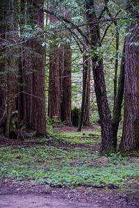 Redwood Escape