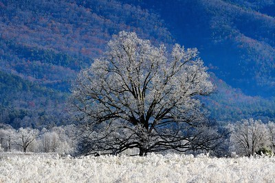 Frost on the Tree Cades Cove - Smoky Mountains