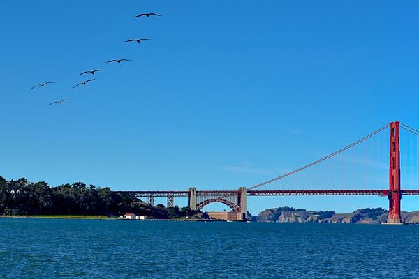 Golden Gate Freedom