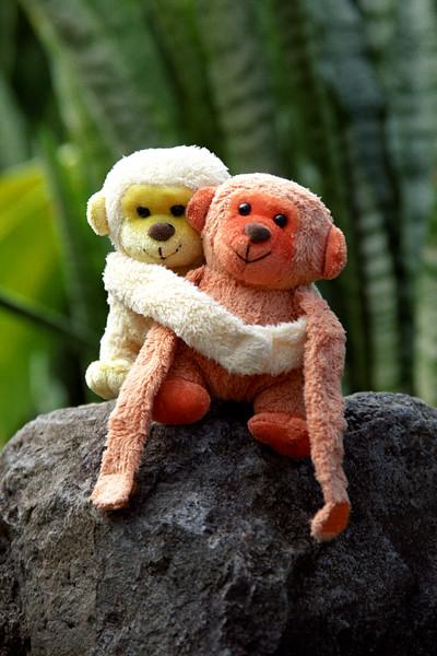 Monkeys in Hawaii 2