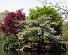 Boston - Public Garden Island