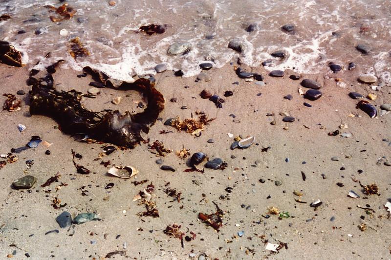 Boston - Nantasket Beach - Seaweed