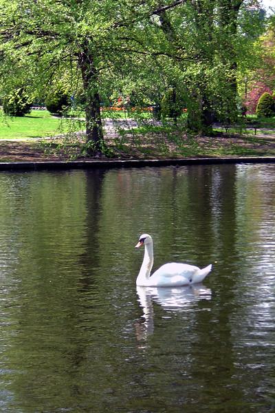 Boston - Public Garden Swan 1