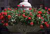 Newport, RI - Flowers in Urn