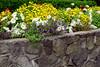 Victoria, B C  - Park Flowers