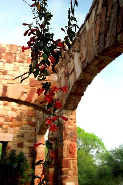 Texas - Austin - Cascading Flowers