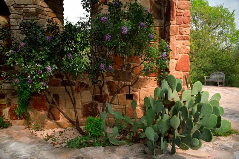 Texas - Austin - Cactus & Flowers 2