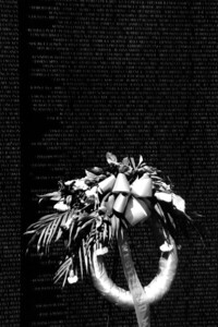 Washington, D C  - Memorial Wreath