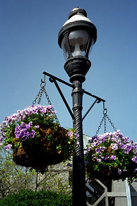 Washington, D C  - Hanging Flower Baskets