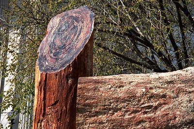 Washington, D C  - Crossections Tree & Granite