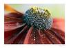Flower_O9A6615