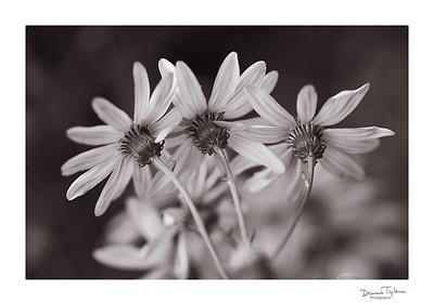 BotanicalGardens2018_O9A4216
