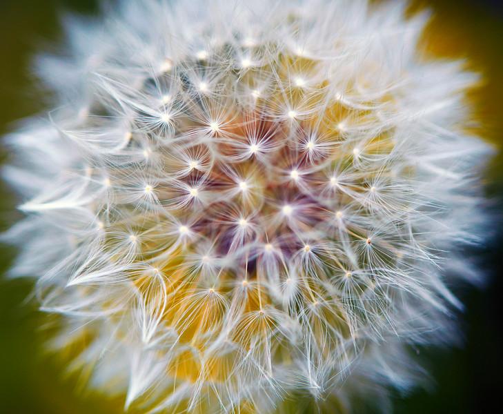 Flower_O9A6035