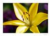 Flower_39A9903