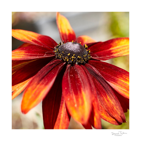 Flower_O9A6325