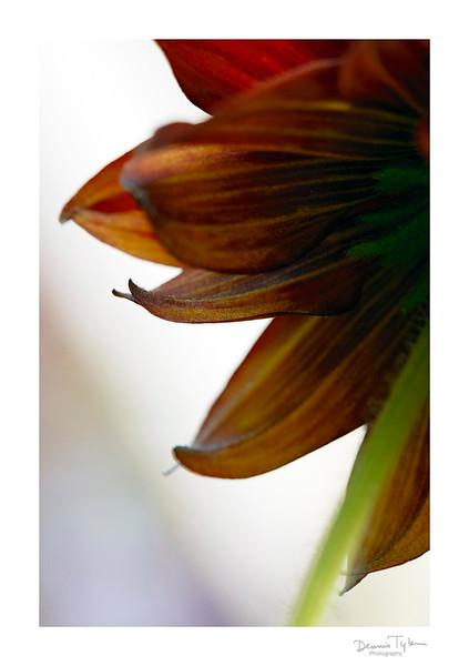 Flower_O9A6605