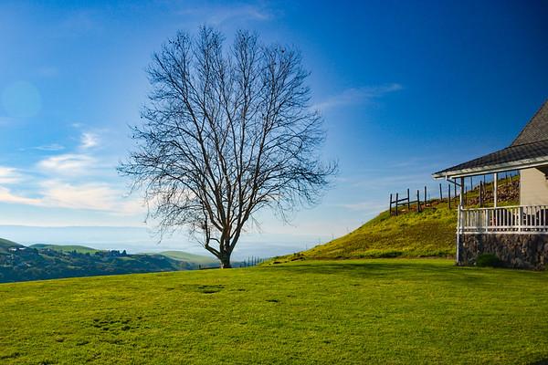 Big Dog Lone Tree