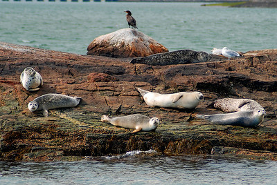 Napping on Seal's Ledge