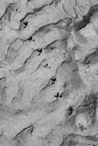The Sandpiper cometh