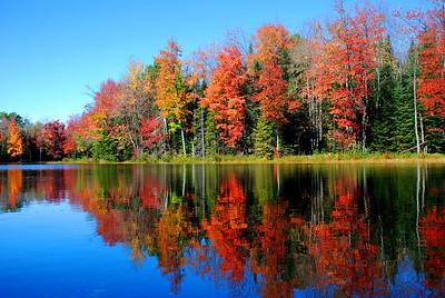 Runaround Pond Foliage