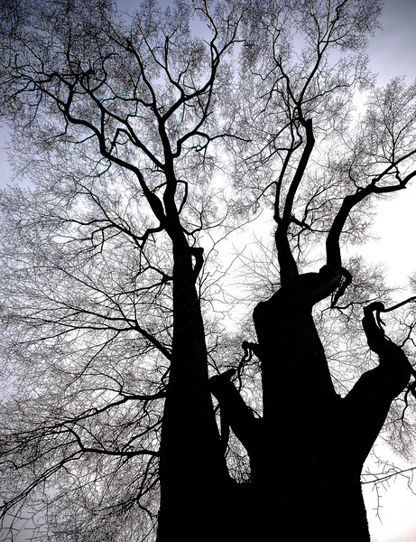 In the Shadows of the Elm