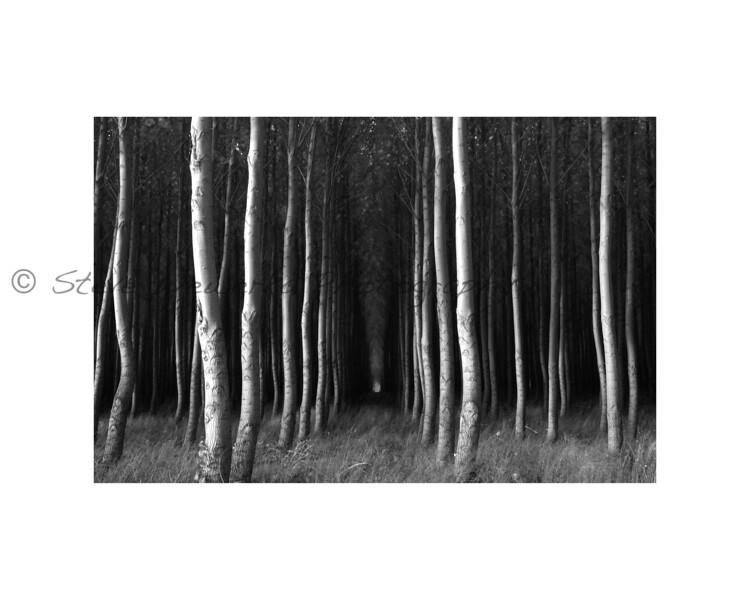 b:w Oregon Trees #2.jpg