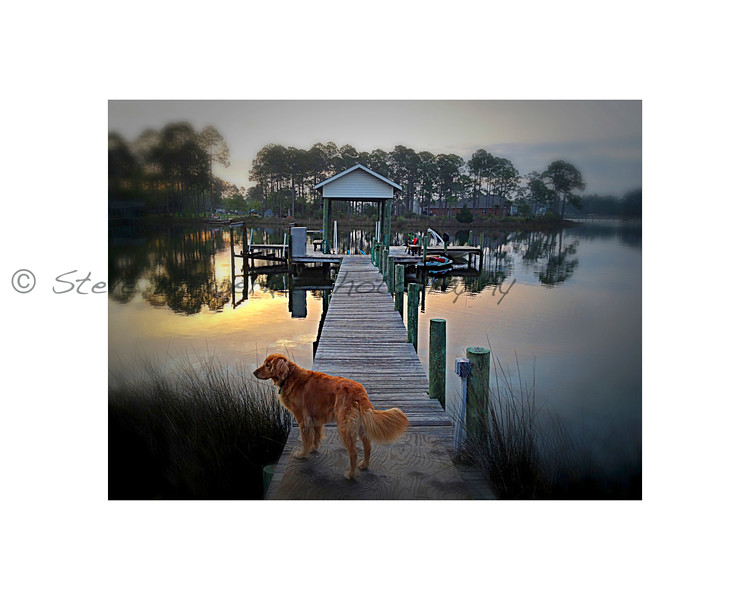 Dog and Dock.jpg