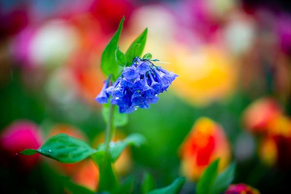 Flowers on Fargo - Geneva, IL - 2020