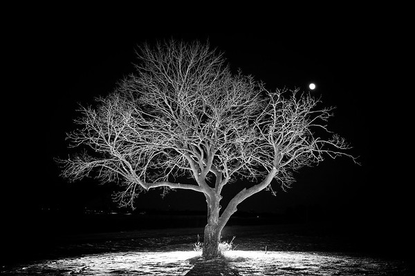 My Favorite Tree - Fermilab - 2017
