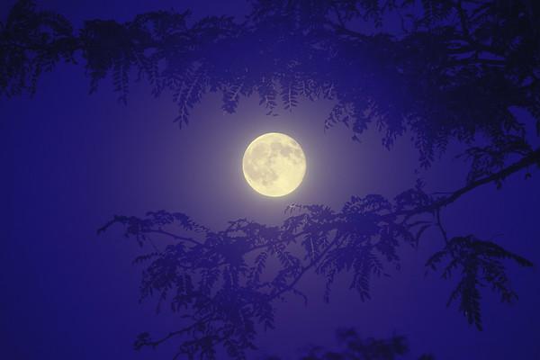Blue Moon - 2015