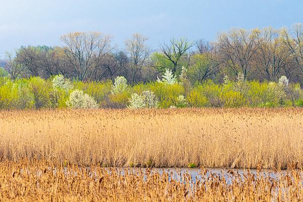 Mill Creek - April 2020