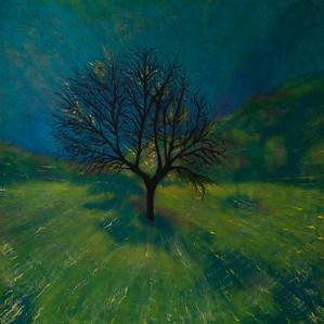 Life of a Tree: Meadow Tree (Barcelona Study III)