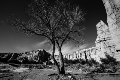 Winter Tree Among White Spires