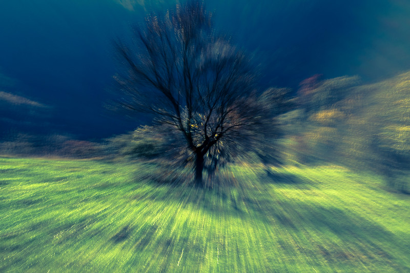 Life of a Tree: Meadow Tree
