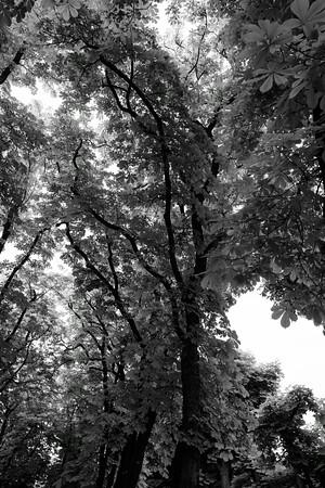 Des Branches d'Arbes 3