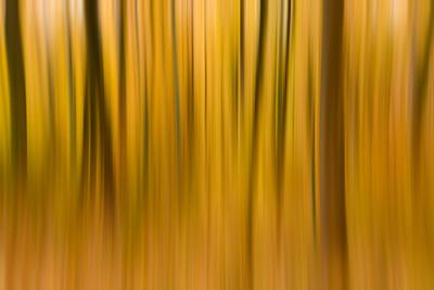 Great Smoky Autumn Blur