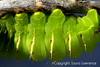 Upside Down Luna Moth Caterpillar