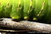 Caterpillar Feet