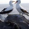 "Birds in the Galapagos Islands, Ecuador <br><center><a href=""javascript:addCartSingle(ImageID, ImageKey)""><img src=""/photos/558556942_SzNJ6-O.gif"" border=""0""></a></center>"