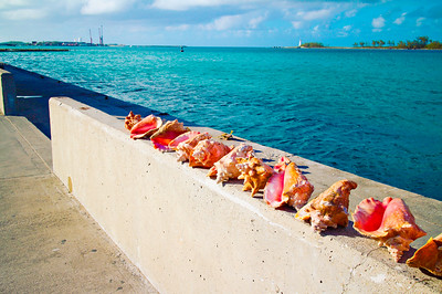 Sea Shells. Bahamas