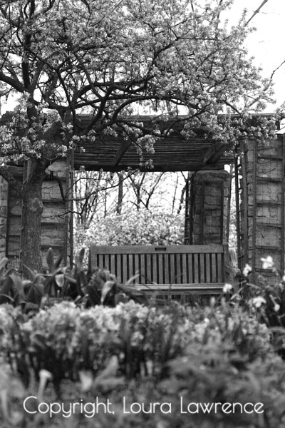 A Pretty Place to Sit, Garden Photo in Black and White