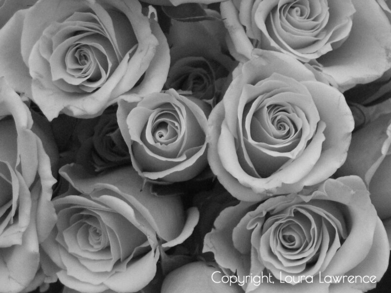 Roses, <br /> Waynesville, OH