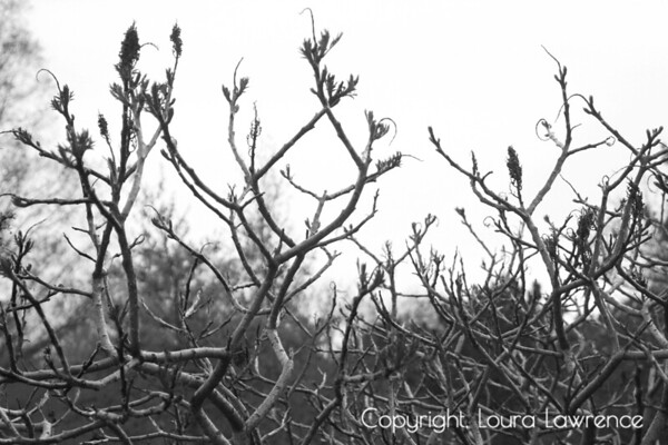 Artistic Branches in Early Spring
