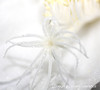 Night Blooming Cereus, Desert Plant, Unusual Flower