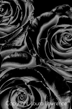Three Gothic Roses