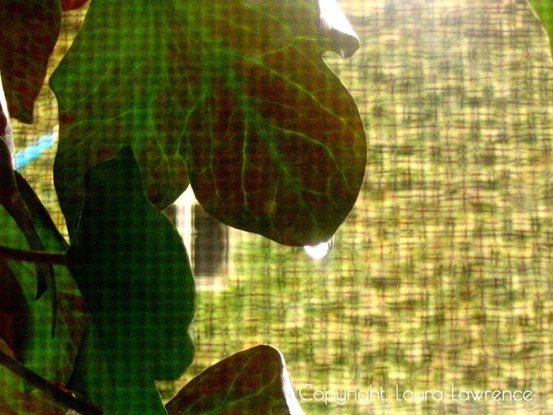 Good Morning English Ivy