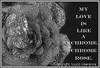 Melting Silver Rose Digital Art with Love Poem