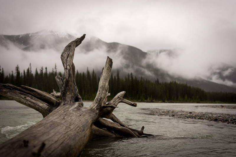 Kootenay Driftwood