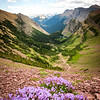 Wildflowers of Waterton