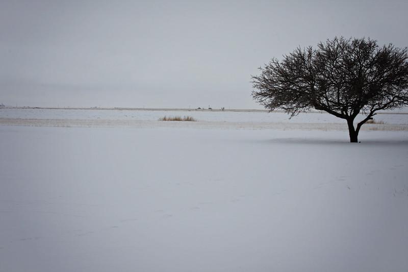 Tree in Snow Field